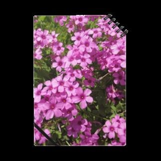 Dreamscapeの野の花の可憐さ・・・ Notes
