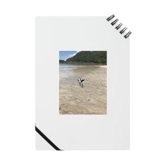 種子島ネコ Notes