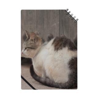 モロッコの猫 Notes