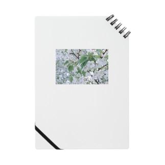 白い花 Notes