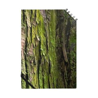 木々の声 Notes