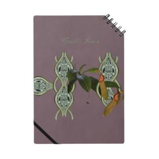 Npenthes Louisaシリーズ Notes