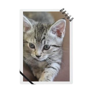 キティの今日も今日とてルナ日和 Notes