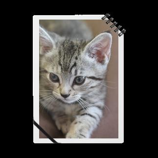 キティの今日も今日とてルナ日和 ノート