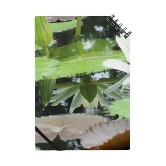 モネの庭 ハス 鏡 Notes
