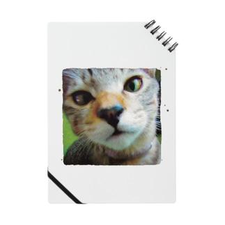 V2FAV CAT TI SUQUARE Notes