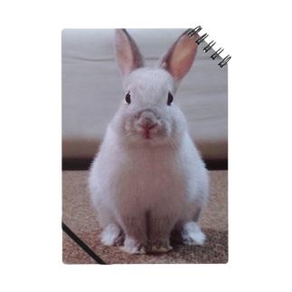 オスマシウサギ Notes