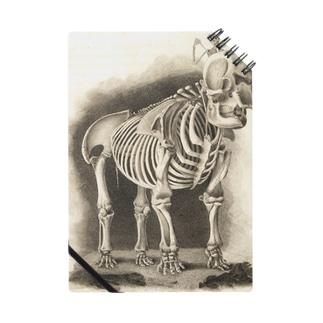 銅版画による人体骸骨 Notes