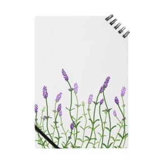 Lavender_1 Notes