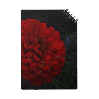 耽美的に咲き誇る一輪の赤い花 Notes