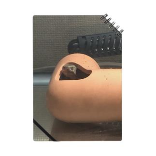 コロン(ミシシッピニオイガメ) Notes