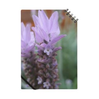 ラベンダーの花 Notes