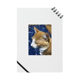 イケ猫  にこくん Notes