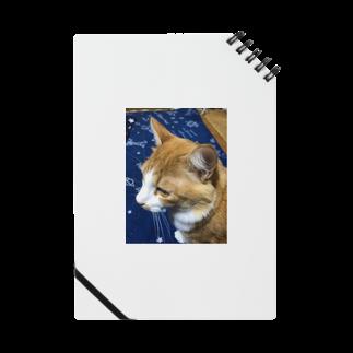 にこにこBLUEのイケ猫  にこくん Notes