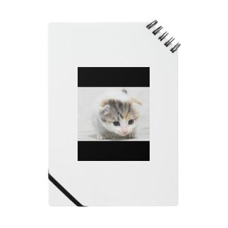 猫の目 Notes