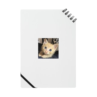 可愛い猫ちゃん💓 Notes
