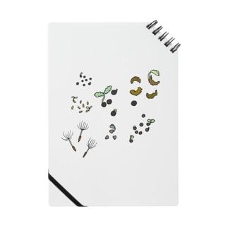 植物の発芽 Notes