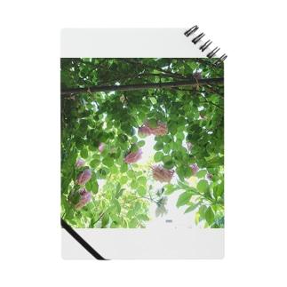 まー坊の庭002 Notes