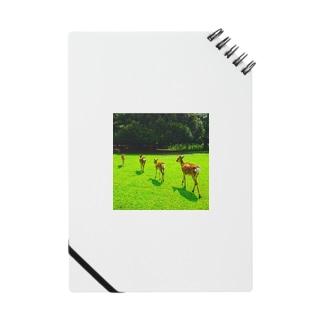 帰る奈良の鹿 Notes