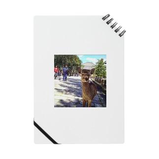 カメラ目線の奈良の鹿 Notes