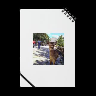 ならばー地亜貴(c_c)bのカメラ目線の奈良の鹿 Notes