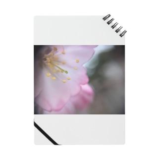 桜サケ Notes