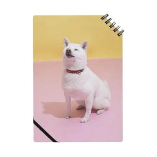 ノート 白柴「我輩は犬である」 Notes