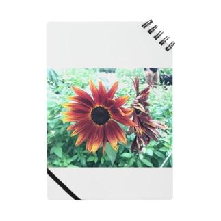 黒ひまわり Notes