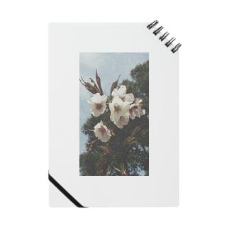 Sakura Notes