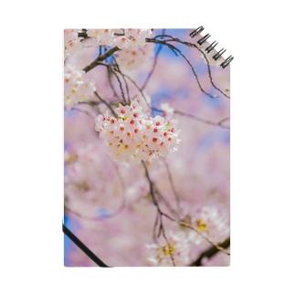桜その1 Notes