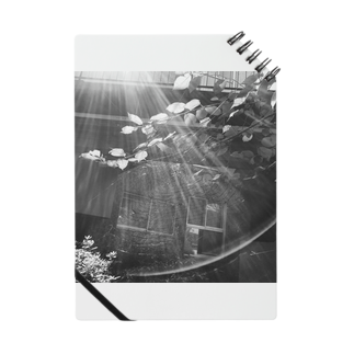 ringokskの蜘蛛と光 Notes