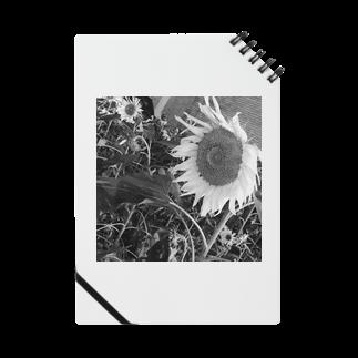 ringokskの向日葵 Notes