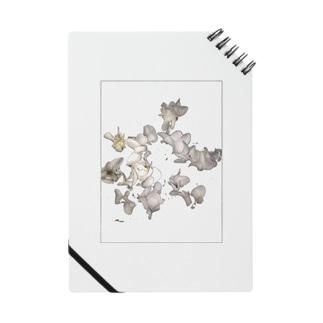砂綿ぼこり Notes