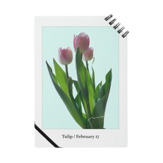 Tulip / pink blue Notes