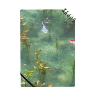 モネの池の様子 Notes