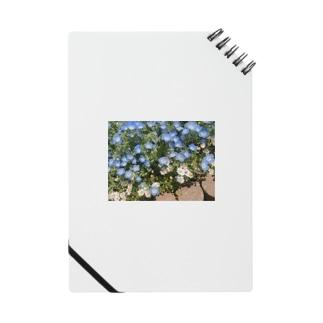 ネモフィラと白い花 Notes