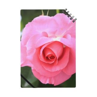 美しい薔薇 Notes