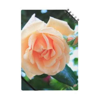 優しい薔薇 Notes