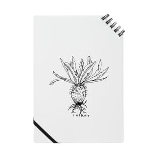 Gracilius(グラキリス) ボタニカルアート Notes
