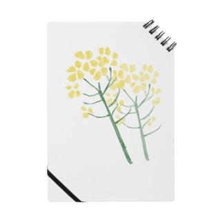 菜の花 Notes