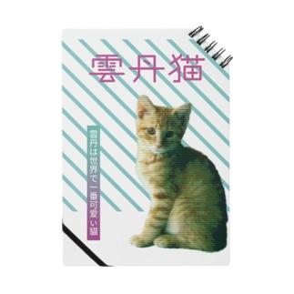 雲丹猫 Notes