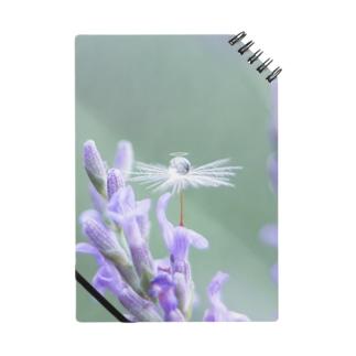 Angel of Lavender (170702) Notes