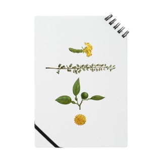 さしみの飾り Notes
