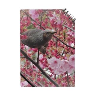 桜とヒヨドリ Notes