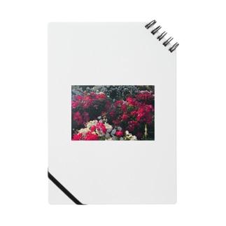 薔薇と鳩 Notes