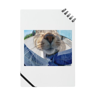 魚眼越し猫ちゃん Notes