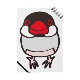 ノーマル文鳥 ノート