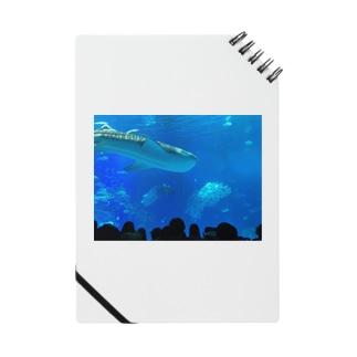 ジンベイザメの写真 Notes