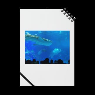 kknkakのジンベイザメの写真 Notes