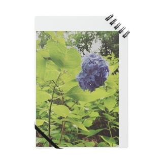 美しさ浮かび上がる雨に濡れた紫陽花 Notes